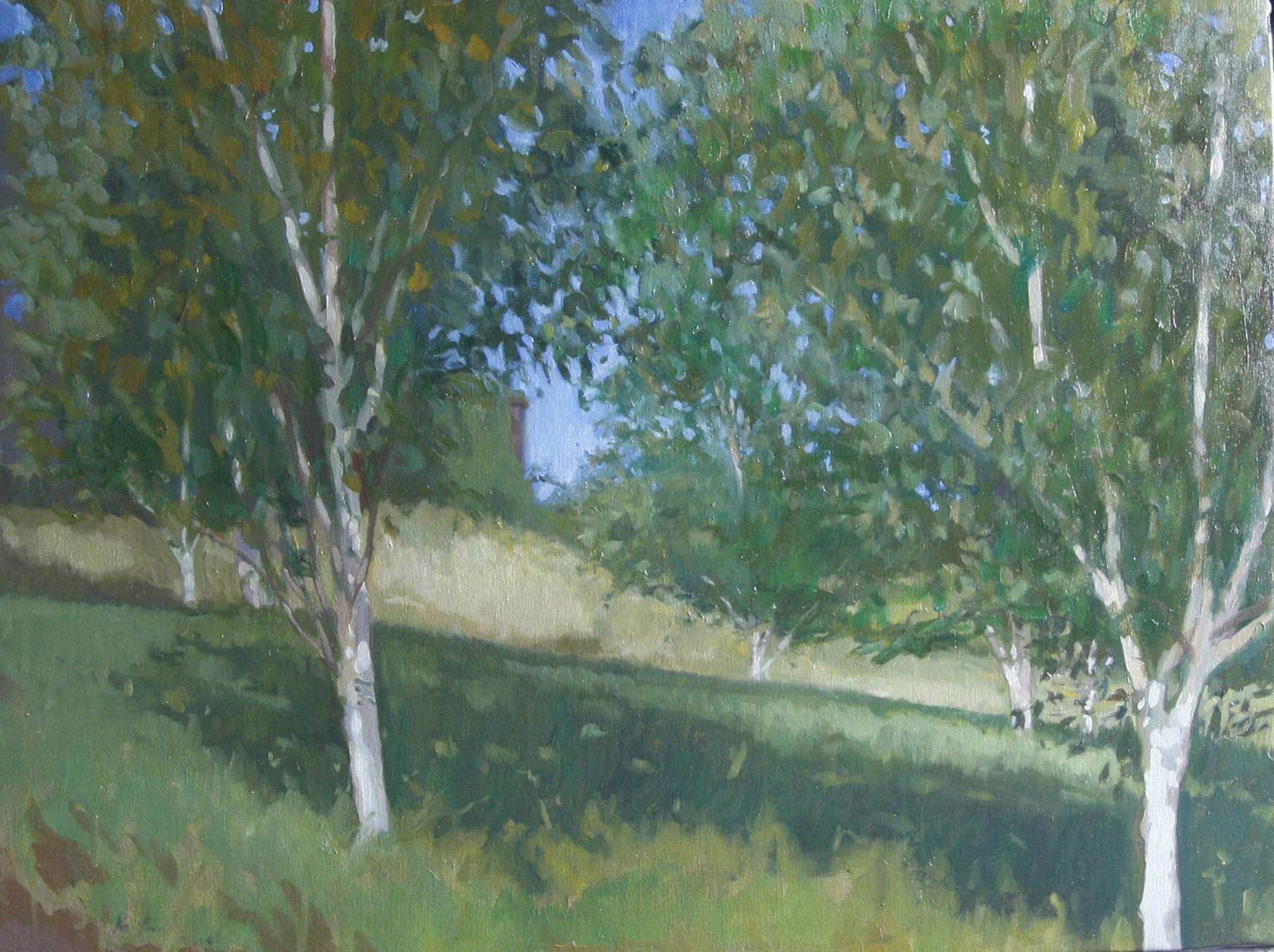 Birch-Grove : Oil on Canvas 60 x 40cm